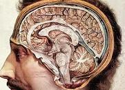 Εγκεφαλικά «σήματα» και παρεγκεφαλίδα