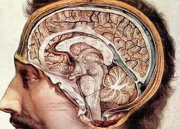 Ανατομική «κατανομή» συμπτωμάτων εγκεφαλοπάθειας