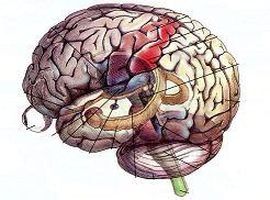 Οι αμοιγώς αισθητικές διαταραχές στα εγκεφαλικά έμφρακτα