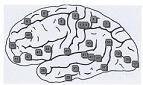 O εγκέφαλος και οι ιώσεις