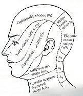 Το πρόσωπο και η γεφυροπαρεγκεφαλιδική γωνία