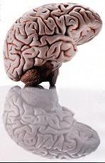 Πως δημιουργείται μια λοιμώδης εστία στον εγκέφαλο;