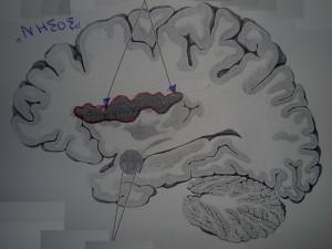 Φόβος και ηδονή στον εγκέφαλο