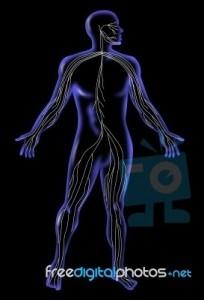 Το αυτόνομο νευρικό σύστημα