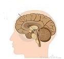 Η α-συνουκλεΐνη και η νόσος του πάρκινσον