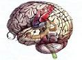 Νευρολογία-Ψυχιατρική-Εγκεφαλικά επεισόδια